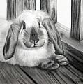 Punky Bunny by Jane Steelman