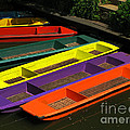 Punts For Hire by Ann Horn