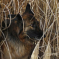 Pup Hiding In Tall Grass by Inspired Nature Photography Fine Art Photography