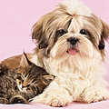 Puppy And Kitten by Greg Cuddiford