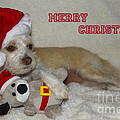Puppy Christmas Toy by Photography by Laura Lee