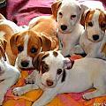 Puppy Crew by Julie Vega