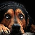 Puppy Dog Eyes by Christina Rollo