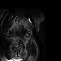Puppy Eyes by Stephanie McDowell
