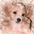 Puppy Love by Athena Mckinzie