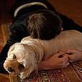 Puppy Love by JC Findley