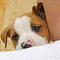 Puppy Love by Kenny Francis