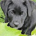 Puppy Love by Tiffany Erdman