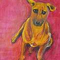 Puppy Love by Usha Shantharam