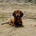 Puppy On The Beach by Nancie Johnson
