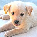 Puppy by Paul Sotelo