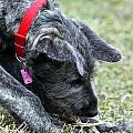 Puppy Play by Ann Butler