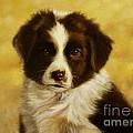 Puppy Portrait by John Silver