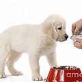 Puppy Receiving Medicine by Jean-Michel Labat