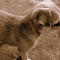 Cute Puppy by Salman Ravish
