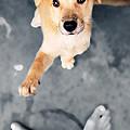 Puppy Saluting by William Voon