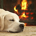 Puppy Sleeping By The Fireplace by Diane Diederich