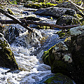 Pure Mountain Stream by Bill Cannon