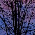 Pure Nature Magic  by Colette V Hera  Guggenheim