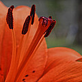 Pure Orange  by Saija  Lehtonen