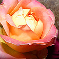 Pure Peachy by Mike and Sharon Mathews