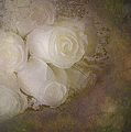 Pure Roses by Susan Candelario