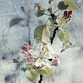 Pure Spring by Dirk Wuestenhagen