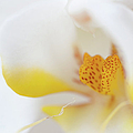Pure White by Sebastian Musial