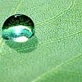 Purity Of Nature by Krissy Katsimbras