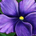 Purple African Violet by Barbara Griffin
