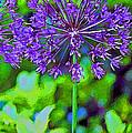 Purple Allium Flower by Karen Adams