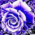 Purple And Blue Rose Expressive Brushstrokes by Barbara Griffin
