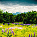 Purple And Mountains And Majesty by Greg Fortier