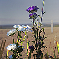 Purple And White Flowers In The Sun by Belinda Greb