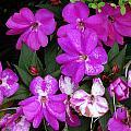 Purple And White by Glenda  Fink