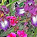 Purple And White Irises And Pink Flowers by April Patterson