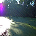 Purple Angel Of Lagoon by Phoenix The Moody Artist