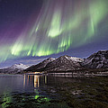 Purple Auroras by Frank Olsen