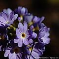 Purple by Barbara Mundt
