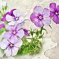 Purple Beauties by Cathie Tyler