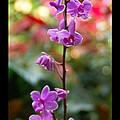 Purple Beauty by Aimee L Maher ALM GALLERY