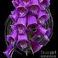 Purple Bells by Ben Yassa