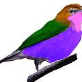 Purple Belly Warbler by Bruce Nutting