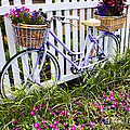 Purple Bicycle And Flowers by David Smith