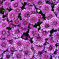 Purple Blanket by Ricky Barnard