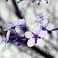 Purple Blossoms by Debra Thompson