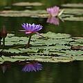 Purple Blossoms Floating by Patricia Twardzik