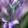 Purple Callas In Calla Vase by Carol Cavalaris