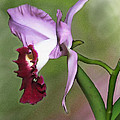 Purple Cattleya Orchid In Profile by Elaine Plesser