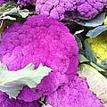 Purple Cauliflower by Susan Garren